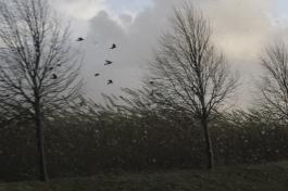 Birds struggling in the storm, October 2013.