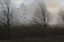 Birds struggling in the storm, October 2013.
